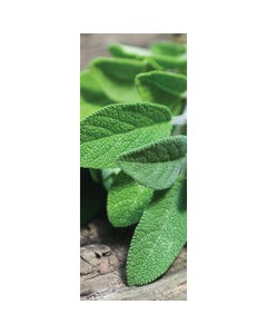Demco® Upstart® Sage Scratch-and-Sniff Bookmarks