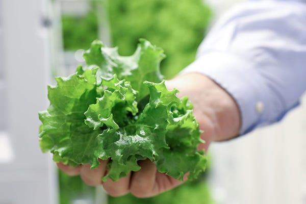 Handful of Lettuce